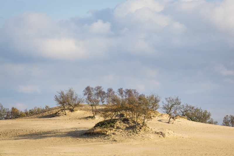 Loonse and Drunense Duinen